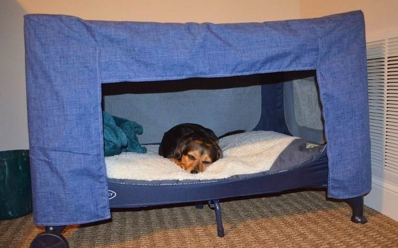 Old Pack N Play Pet Bed