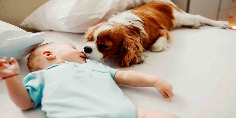 Introduce Your Dog To Your Baby